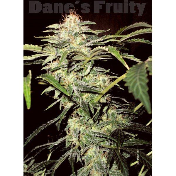 dane-s-fruity